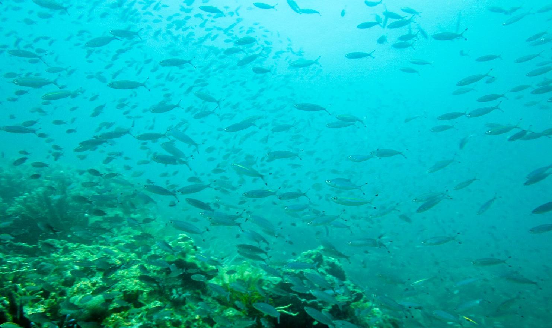 Reef Twin Peaks, Philippines