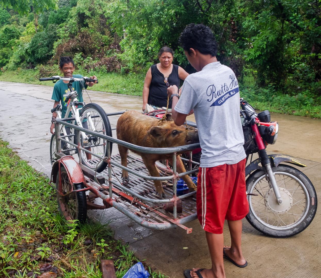 Свинья, Филиппины