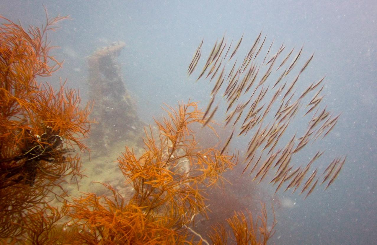 Затонувшее судно, о.Тангат, Филиппины