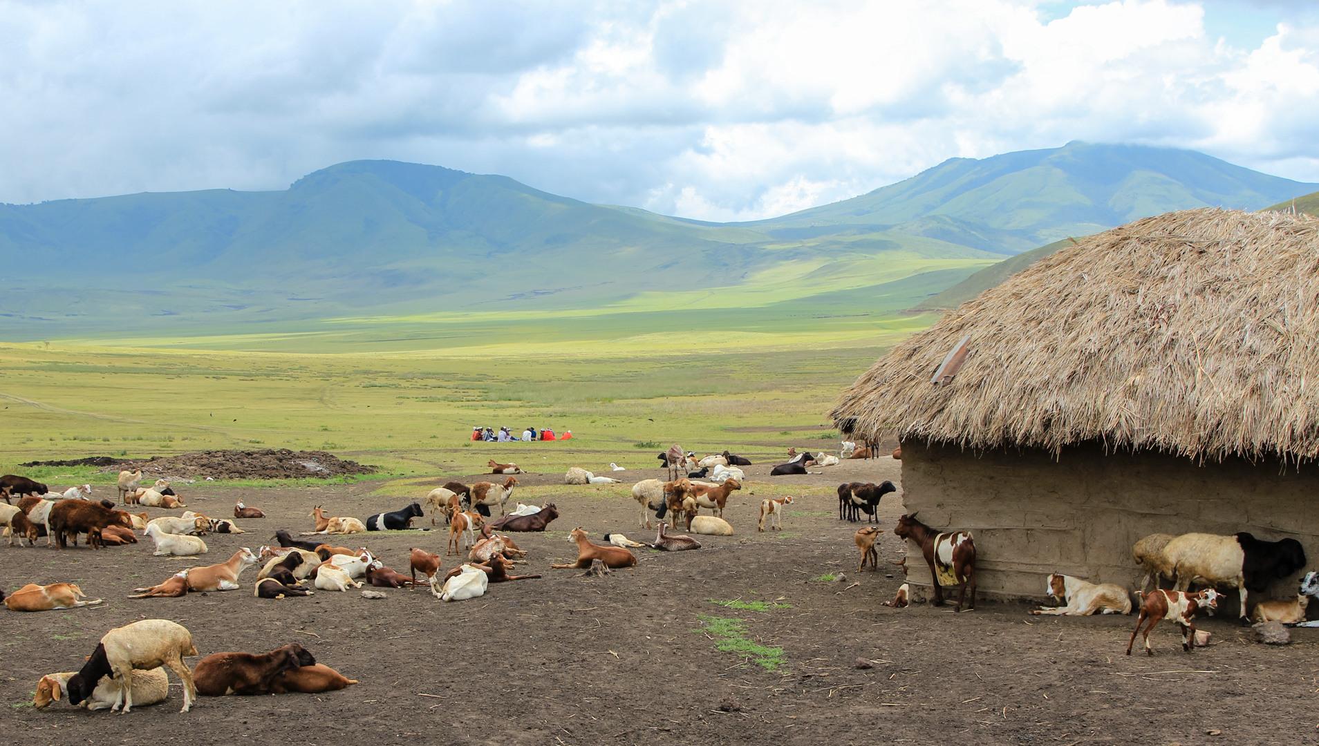 lеревня масаев, кратер Нгоронгоро