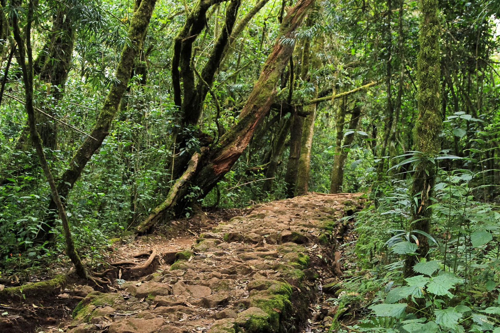 Дорога Марангу к пику Килиманджаро