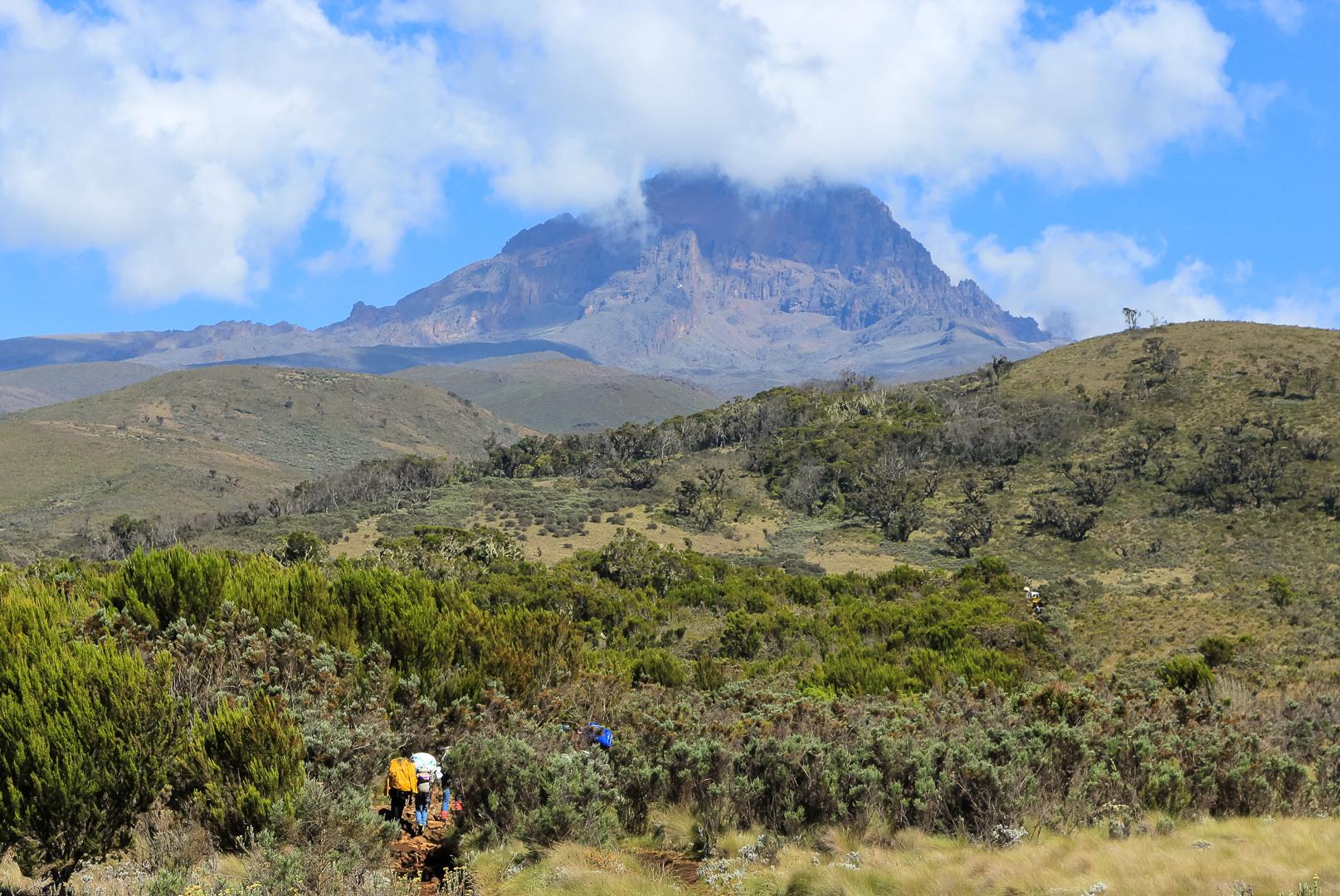Вересковые пустоши на Марангу, Килиманжаро