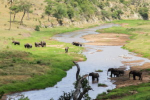 Река Тарангире