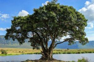 Дерево у маленького озера, Нгоронгоро