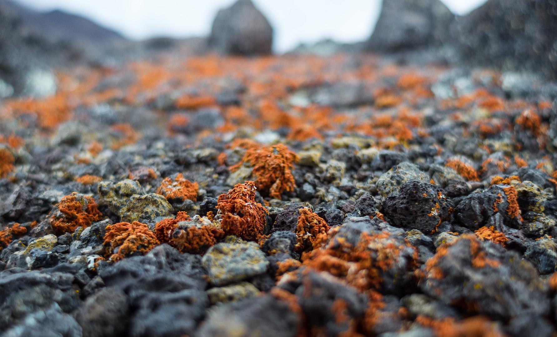 Вулканическая порода, Килиманджаро