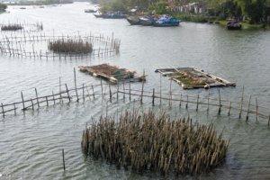 Загоны для рыбы на реке Thu Bon