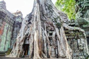 Храм Та Пром (Ta-Prohm), Ангкор