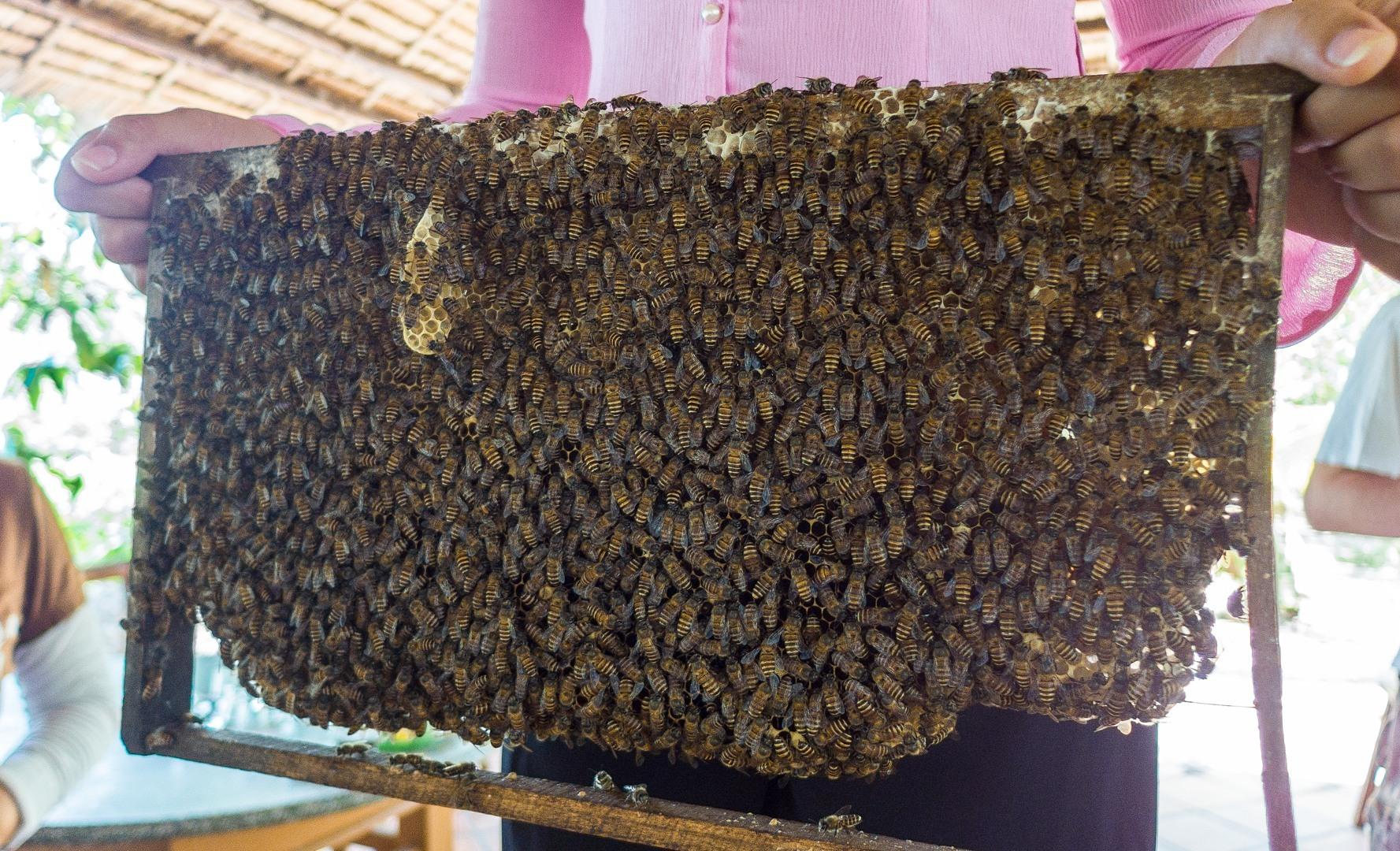 Пчелы, Меконг