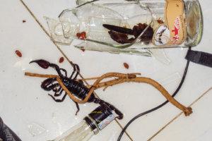 Настойка на скорпионе, Сайгон