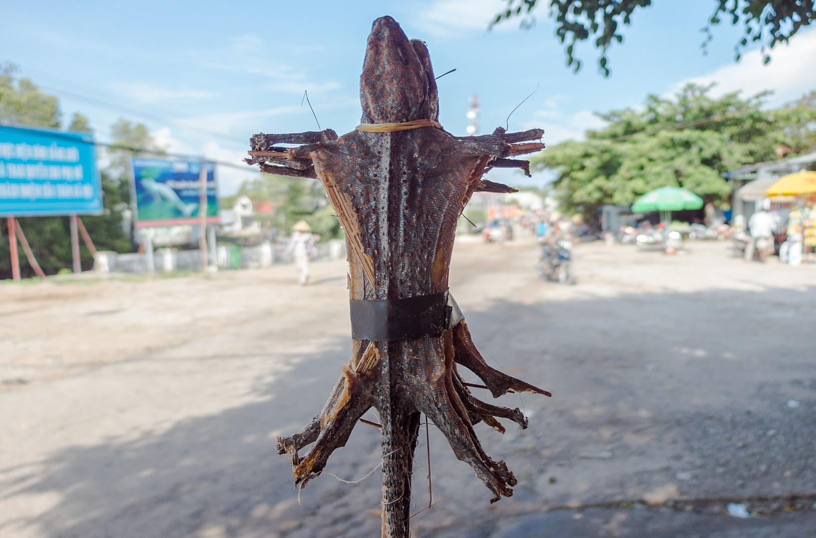 Сушёные гекконы