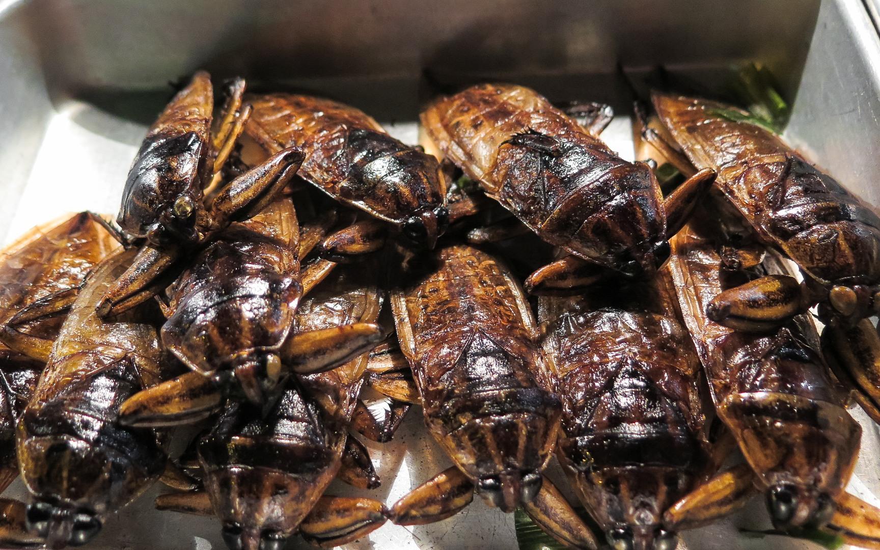 Жуки прожаренные в масле
