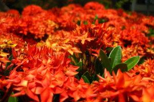 Цветы, Сайгон