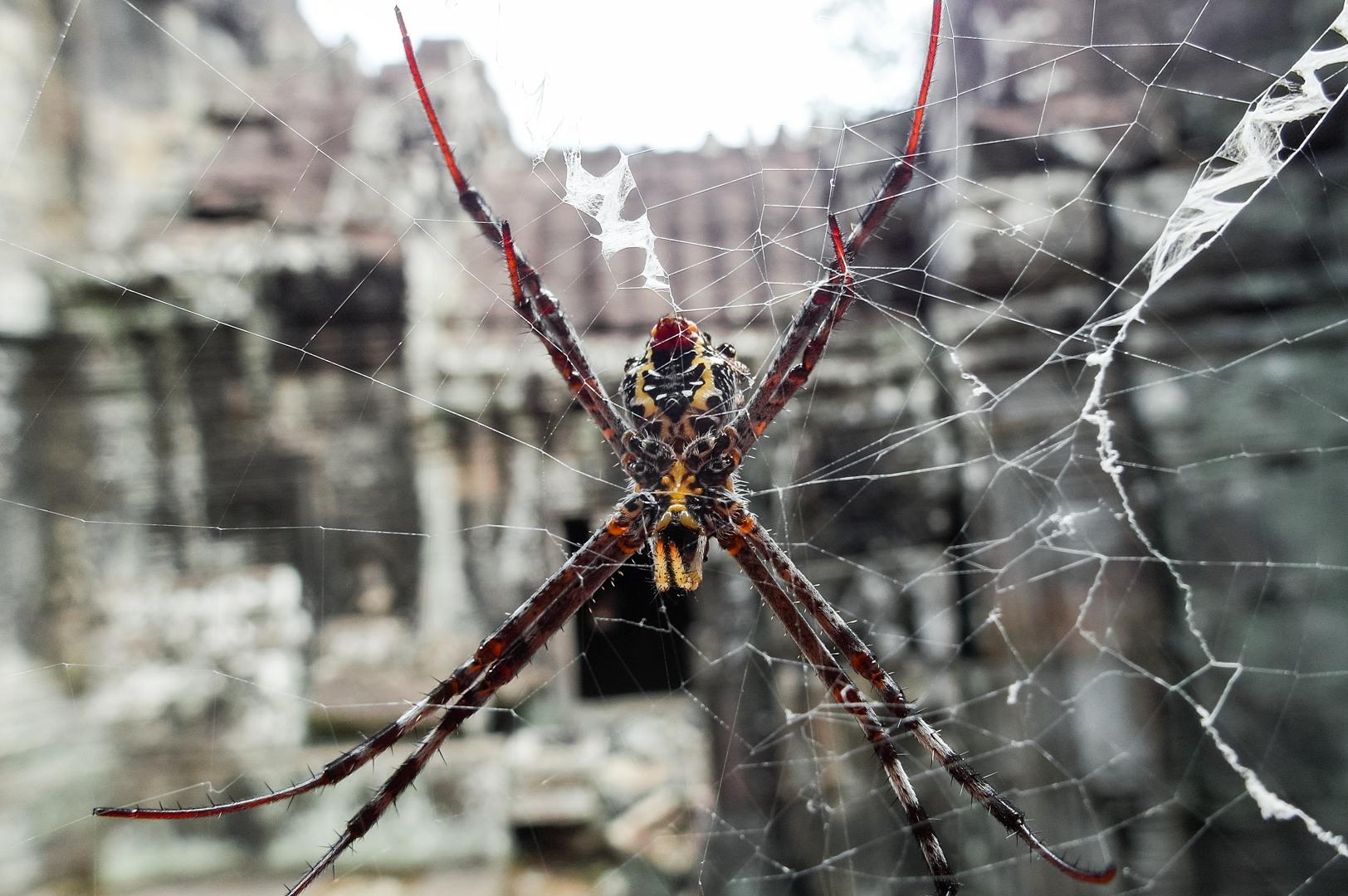 паук в храме Бантей Кдей (Banteay Kdei), Ангкор