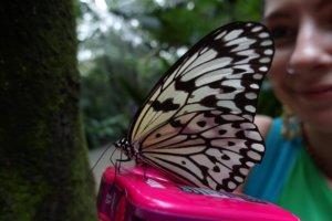 Бабочка Batterfly (Lepidoptera), Зоопарк Сингапура