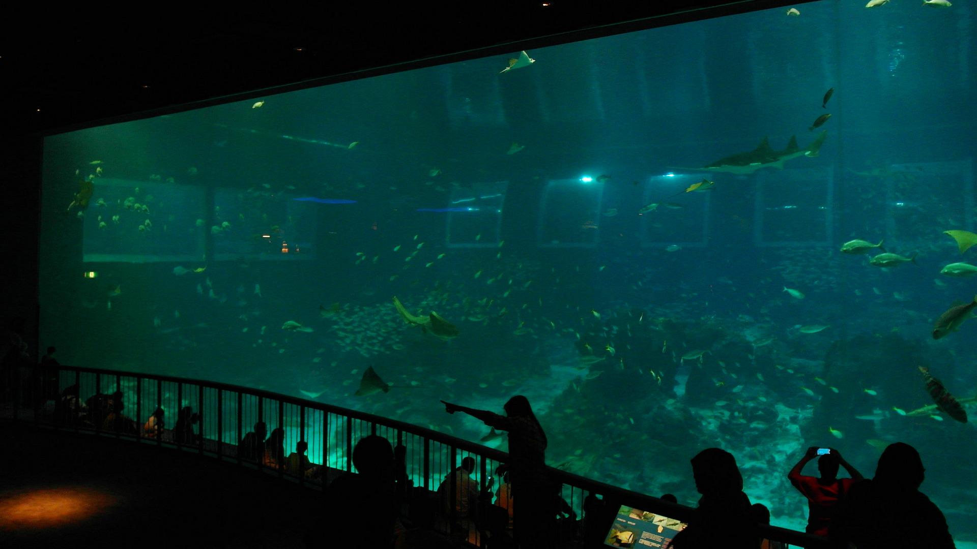 Большой аквариум, S.E.A. Aquarium Singapore
