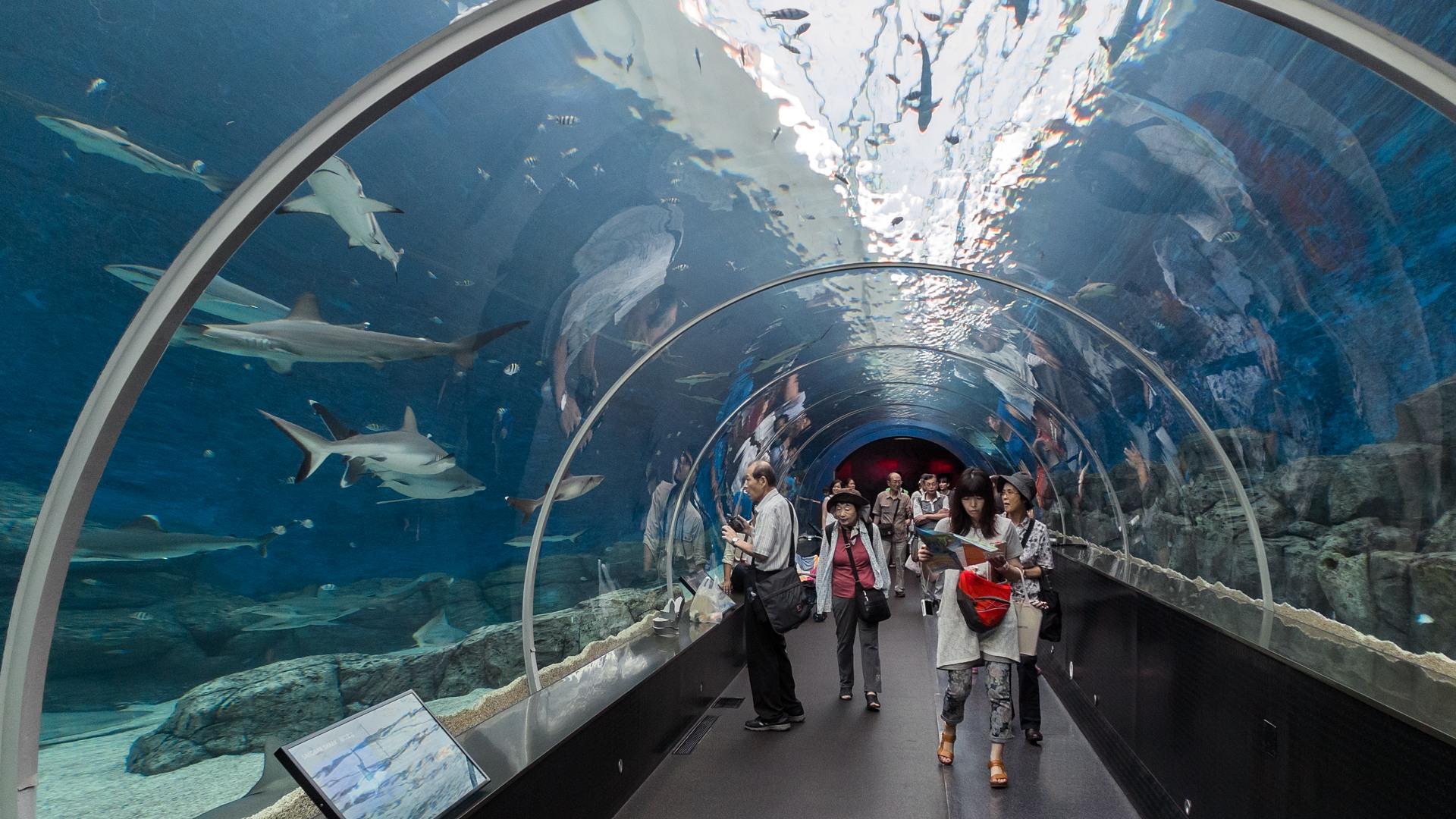 Ареал акул (Shark seas), S.E.A. Aquarium