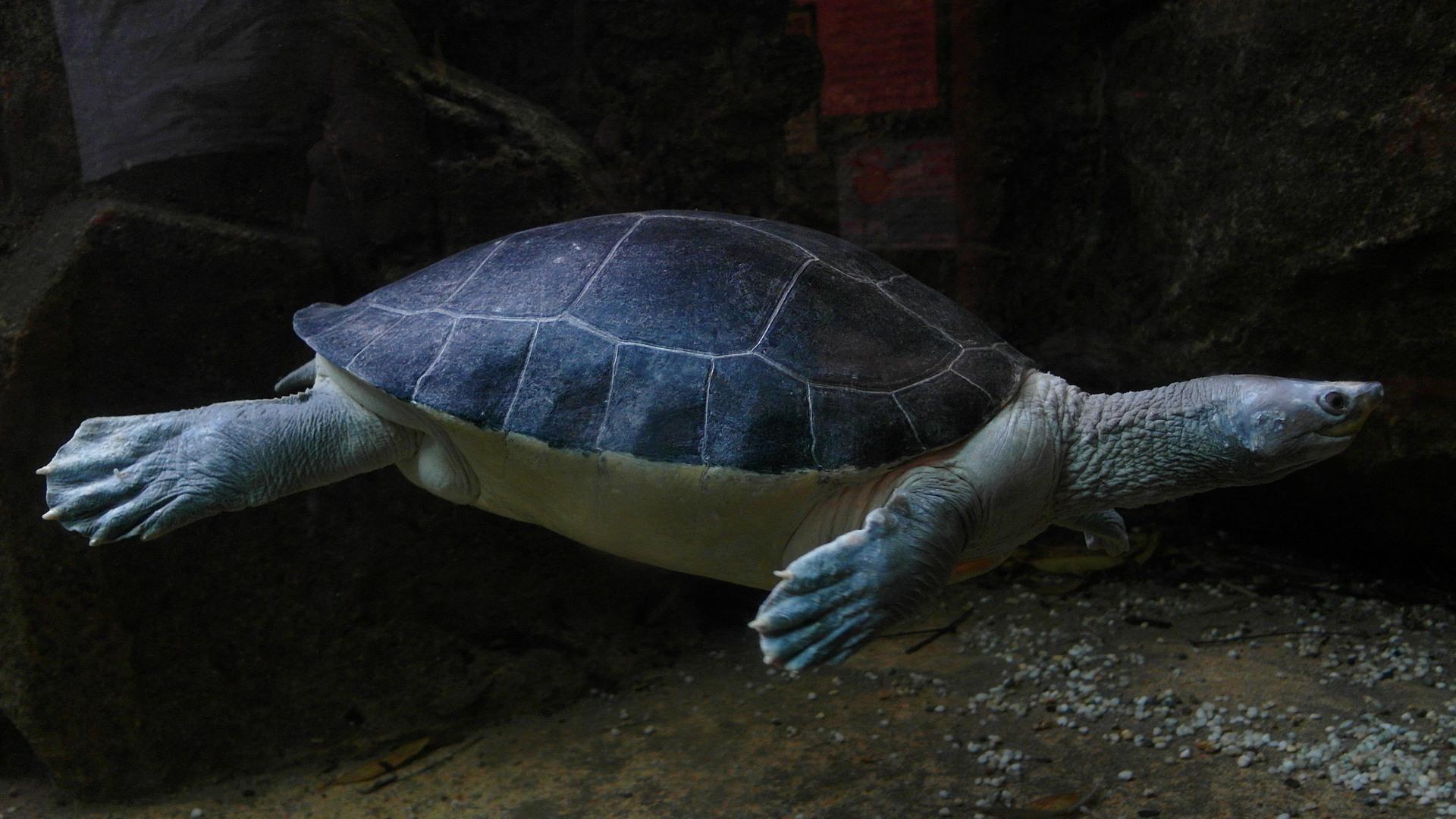 Черепаха Turtle (Testudines), Зоопарк Сингапура