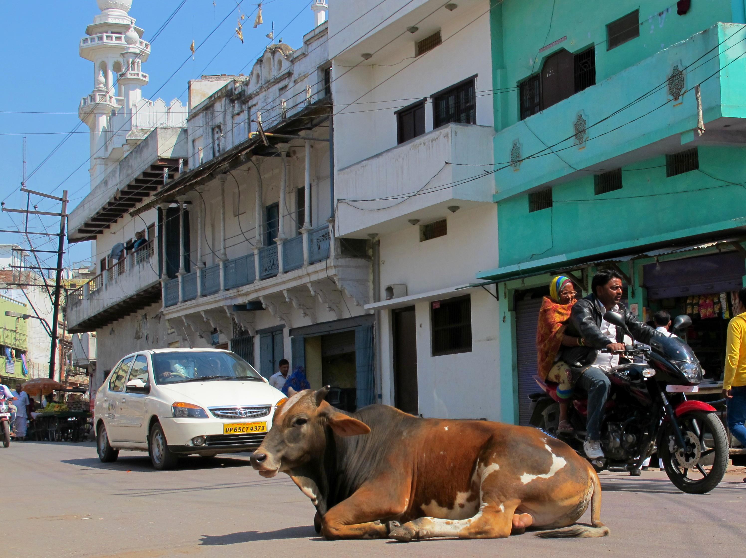 Корова на улице Варанаси, Индия