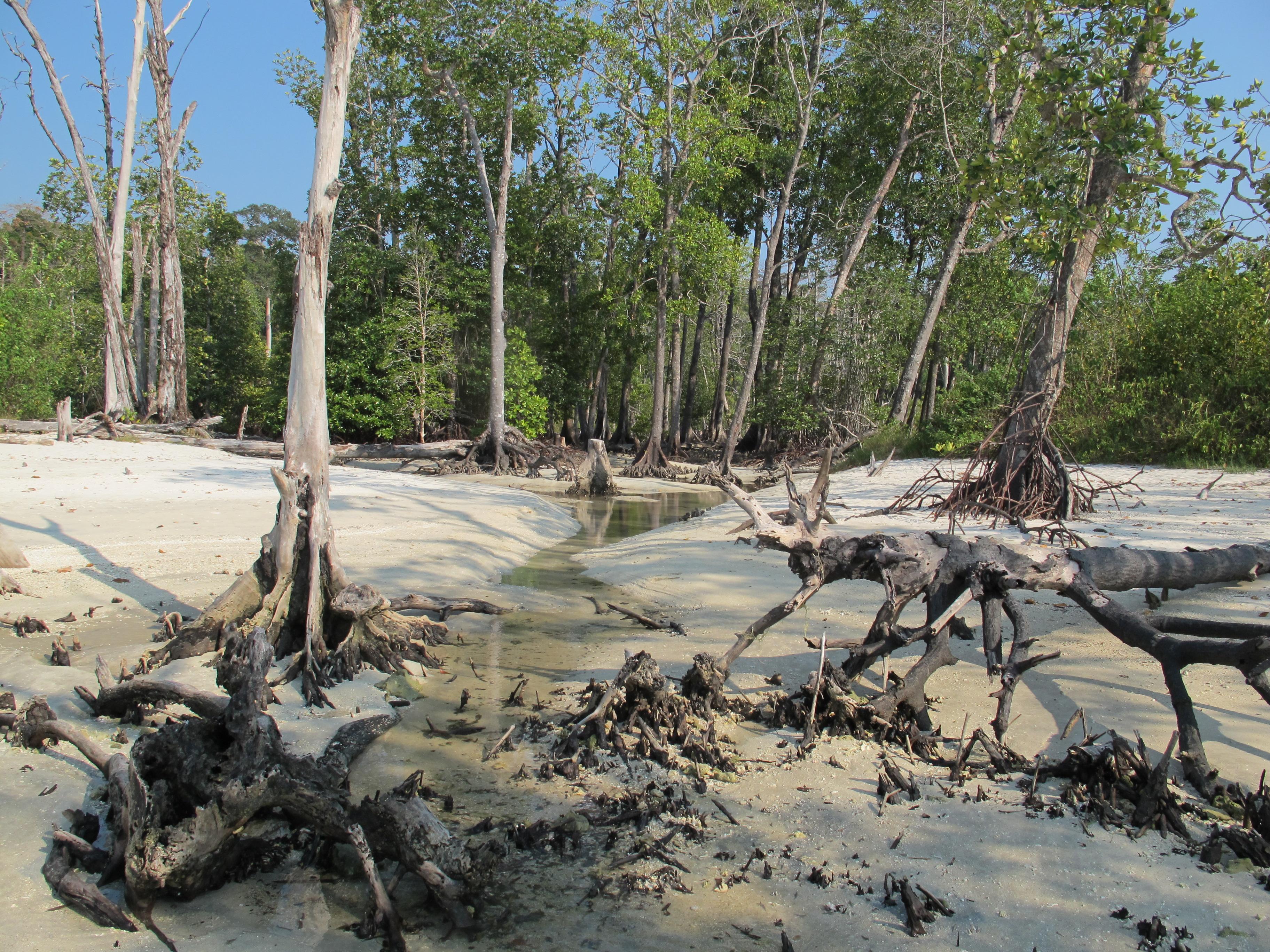 Мангровая низина (Mangrove Forest)