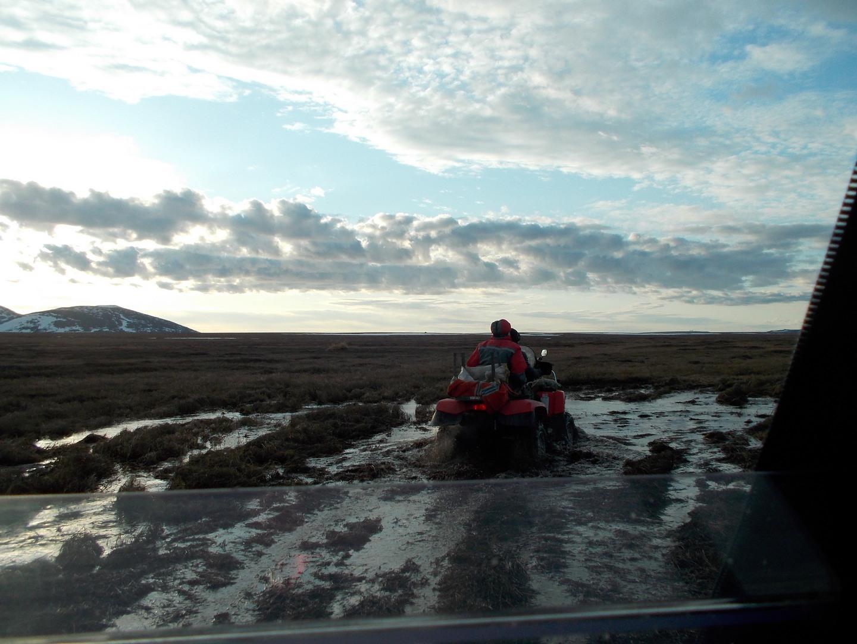 болото в тундре