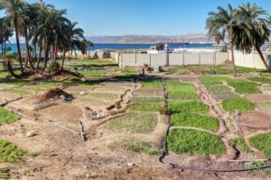 овощной сад с грядками, Акаба